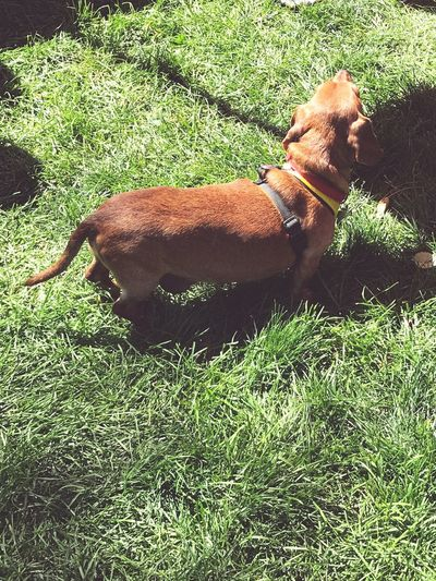 EyeEm Selects Grass Domestic Animals Animal Themes Mammal Field One Animal No People Day Livestock Outdoors Nature