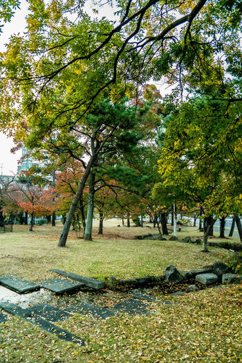 Streetphotography Street EyeEmNewHere Autumn Mood Green Tree Plant Park Growth Nature Green Color Beauty In Nature Day Park - Man Made Space Tranquility Autumn Grass Incidental People Tranquil Scene Branch Land Outdoors Scenics - Nature Environment Change