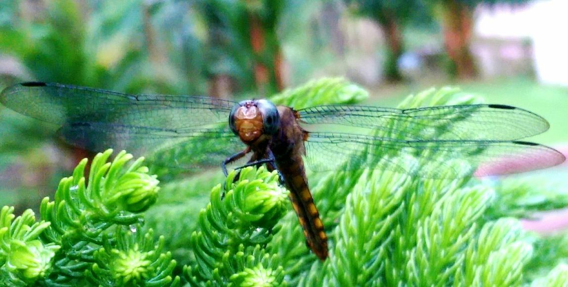 Dragonfly Nature Insects Insects Of The World Animals In The Wild One Animal Animal Themes Animal Wildlife Nature Outdoors Focus On Foreground No People Day Leaf Plant Close-up
