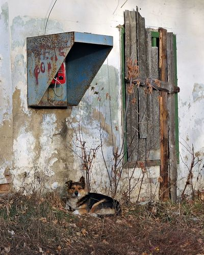 Dog relaxing in old abandoned building