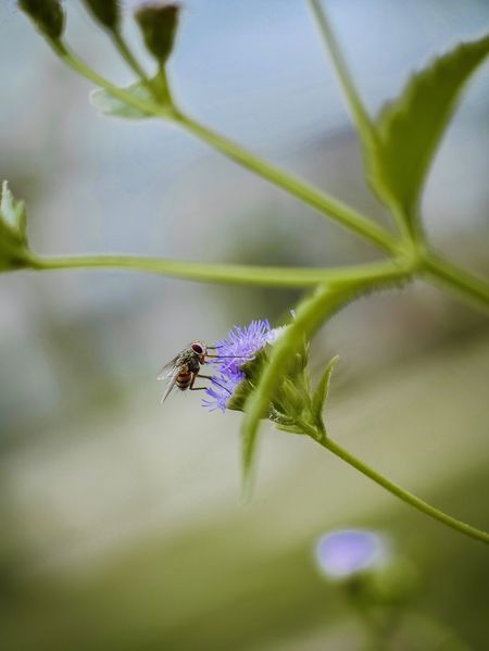 Flower Insect Invertebrate Plant Animals In The Wild Flower Flowering Plant One Animal Animal Fragility Animal Themes Growth Close-up Beauty In Nature Animal Wildlife Nature Vulnerability  Day No People Freshness Purple