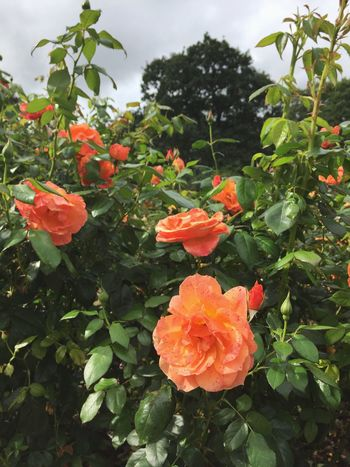 Plant Growth Flowering Plant Flower Fragility Freshness Beauty In Nature