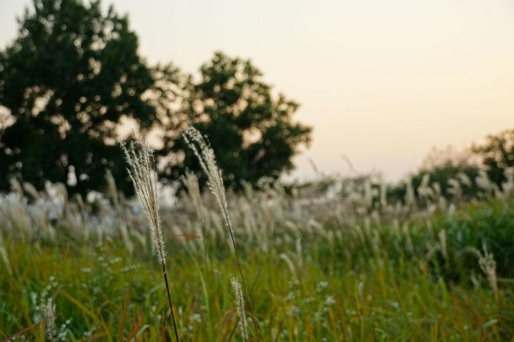 Grass Mood