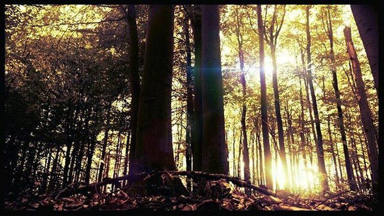 Forest Awphoto Match_colour Magic Likeforlike Like4like Lubiepolske Ig_poland Poland Photooftheday Photographer Kings_meteo Sunshine