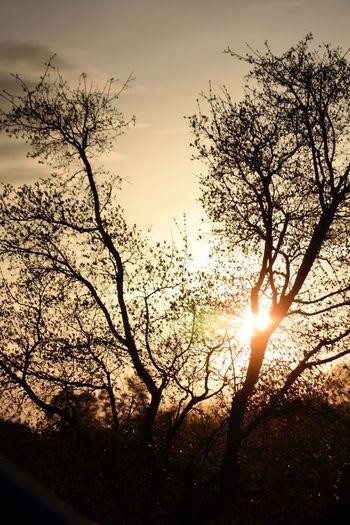 Dusk Tree Sunset Orange Sky