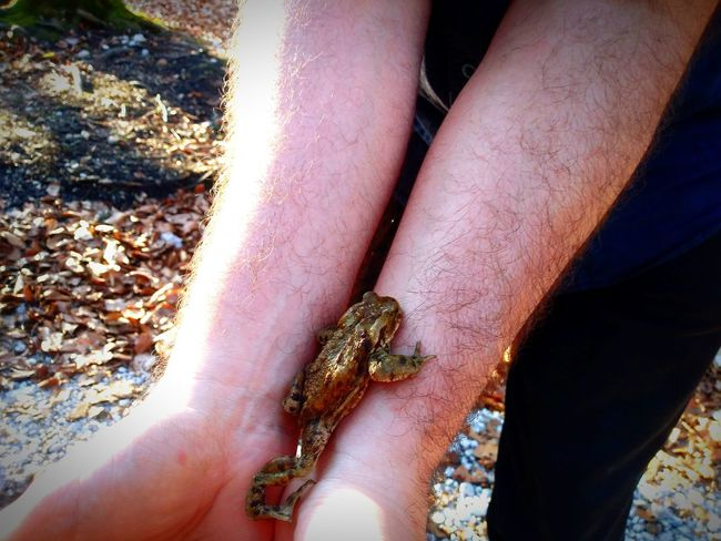 Lovely frog on the arms Human Arms Approaching From Another View Animal Representation Human Hand Low Section Close-up