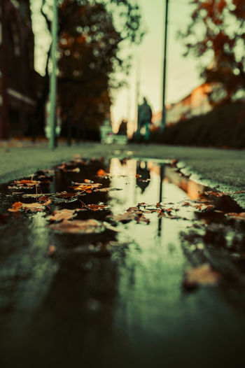Surface level of wet leaves on street in city during sunset