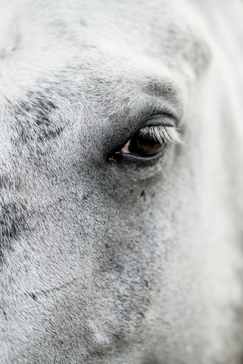 Close-up of a white horse / Portrait White Horse Animal Themes Close-up Day Dog Domestic Animals Horse Mammal No People One Animal Outdoors Portrait White