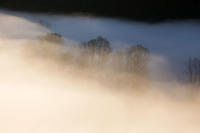 foggy morning in Apuseni Mountains Light Bare Tree Beauty In Nature Cloud - Sky Day Fog Landscape Minimalism Mist Nature No People Outdoors Scenics Sky Sunrise Tranquil Scene Tranquility Tree