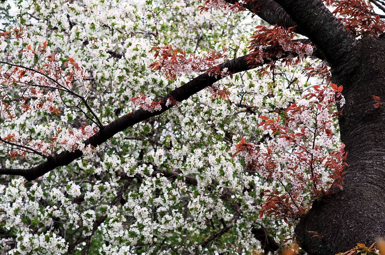 Close-Up Low Angle View Of Flower Trees