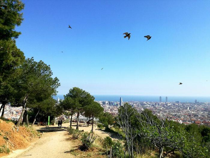Flying Outdoors Tree Nature Beauty In Nature No People Sky Mediterranean  Sunny☀ Sea BCN Barcelona Catalunya Flying High Animal Themes Birds In Flight