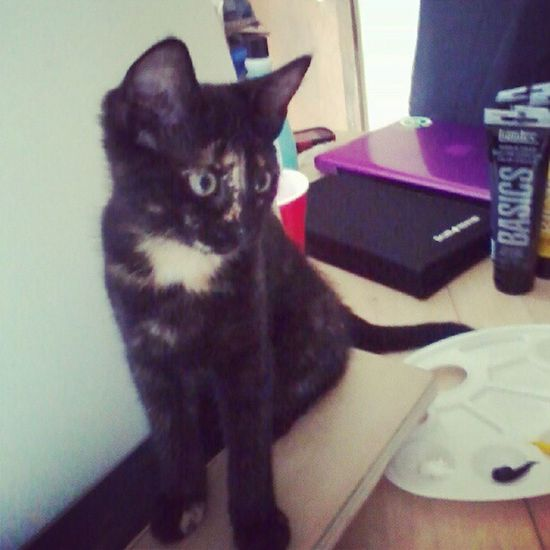 Negri Readytopaint Homemadestand Cat paintcanvaspose
