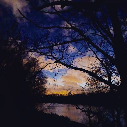Tree Sky No People Silhouette Branch Sunset Nature Low Angle View Beauty In Nature Outdoors EyeEmNewHere