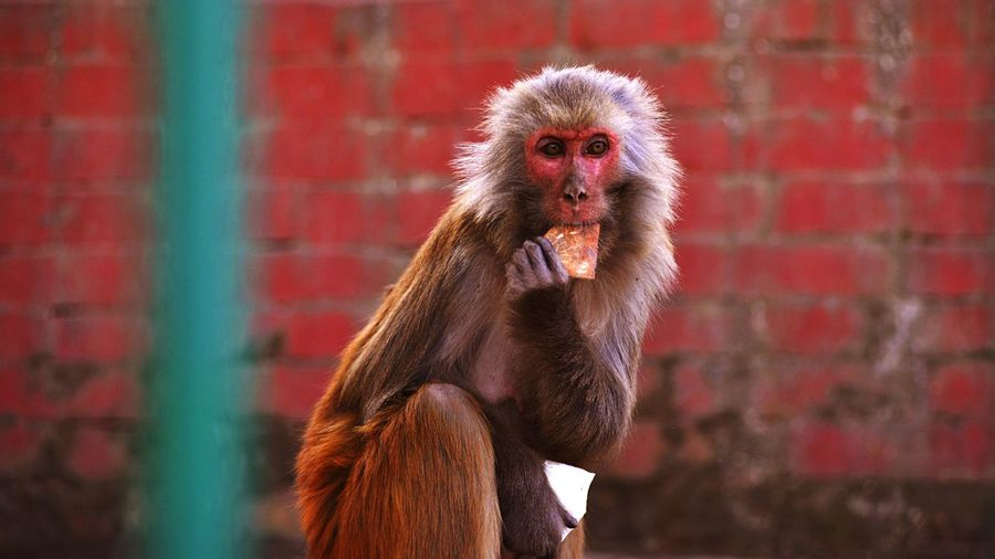 HUMANITY Street Photography Outdoors EyeEm Best Shots - The Streets Nepal Animals Monkey Life Portrait Temple