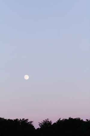 Wonderful full moon evening. Love sitting outside. Full Moon Moonlight Moon_collection Moon Shots Eyeemnaturelover EyeEm Best Shots EyeEm Gallery Silhouette Treescollection Trees And Sky Sky_collection Sunset #sun #clouds #skylovers #sky #nature #beautifulinnature #naturalbeauty #photography #landscape