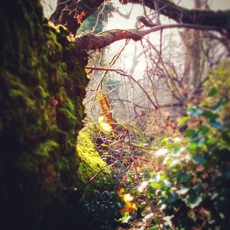 Nature Tranquility Enjoying Life Hugging A Tree