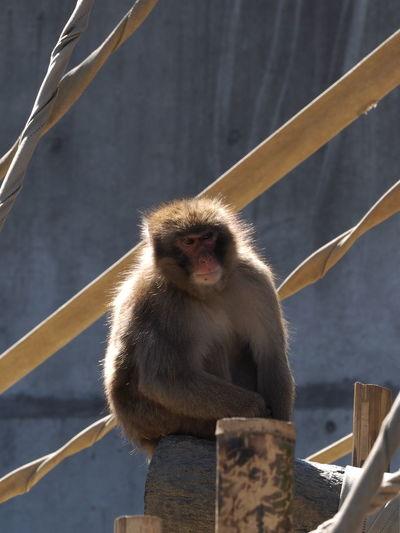 Monkey relaxing on log