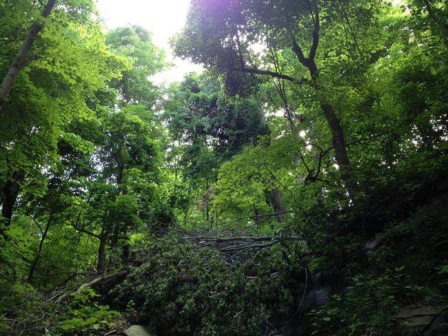 canopy EyeEm Best Shots Nature Eye Em Nature Lover Forest