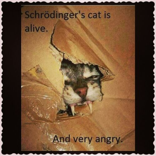 Schroedingers Cat is Alive  and Angry tbbt
