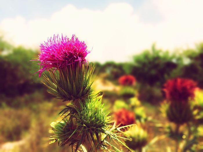 Aférrate a vivir. Flowers Nature Naturelovers Flower Collection