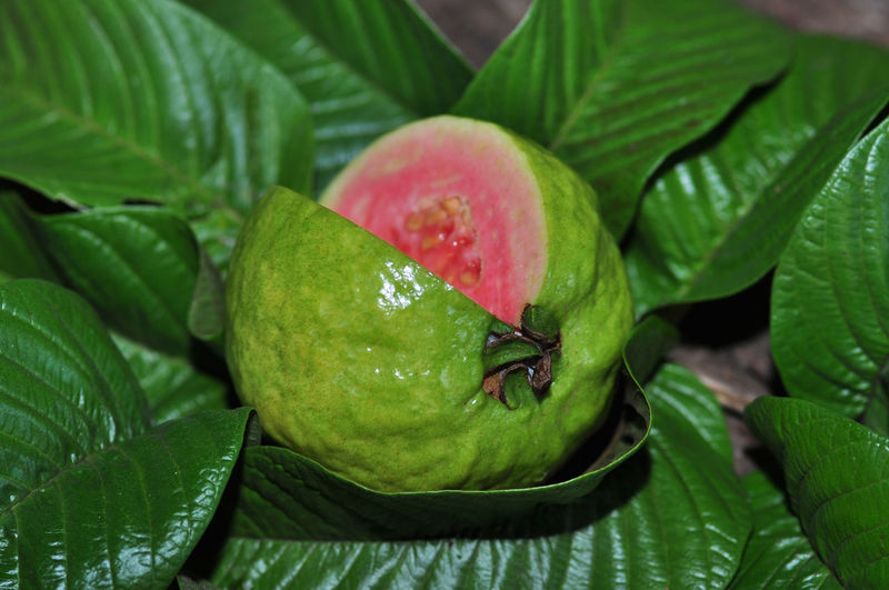 guava fruits Leaf Fruit Social Issues Healthy Lifestyle Close-up Plant Green Color Food And Drink