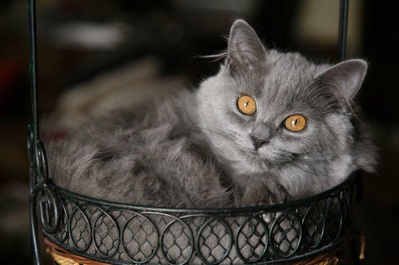 Close-up portrait of cat sitting on metallic basket
