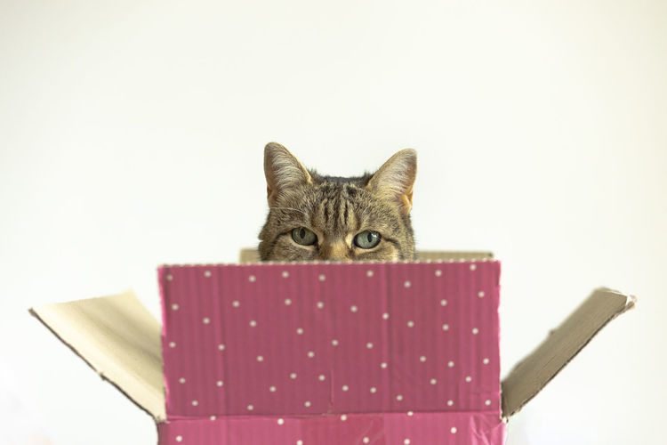Portrait of a cat looking away against white background