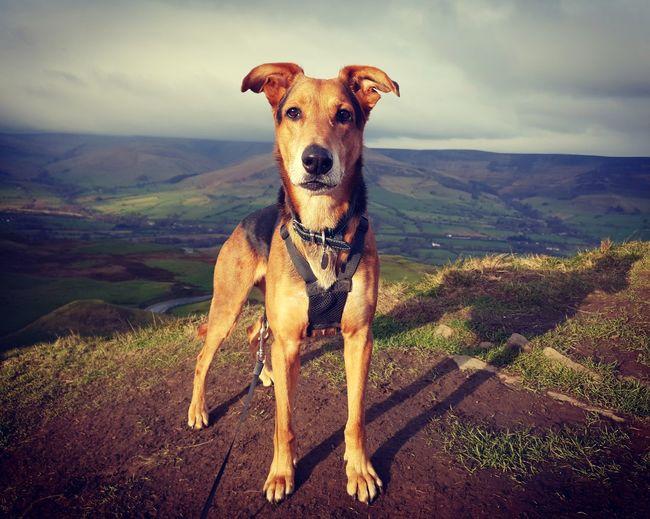 Portrait of dog on landscape against sky