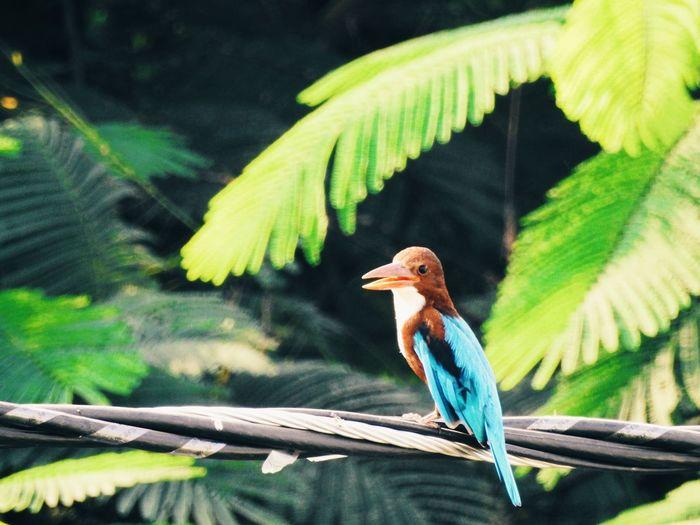 Bird Bird Photography Birds Birdwatching Depth Of Field Selective Focus Woodpecker