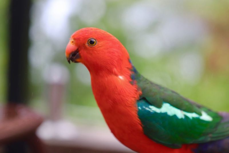Partner Collection 100mm Canon800D Canon Orange Color Red Color Green Color Bird Vertebrate Animal Wildlife Animals In The Wild One Animal Close-up Focus On Foreground Perching Animal Body Part Outdoors Parrot Beak Day