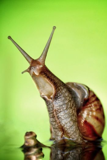 scream Snail Scream Green Macro Water Concept Stalk No Flash Green Background Climb Up One Animal Animal Themes Insect Animal Wildlife Brown Colored Background No People Living Organism Close-up Nature Outdoors Day