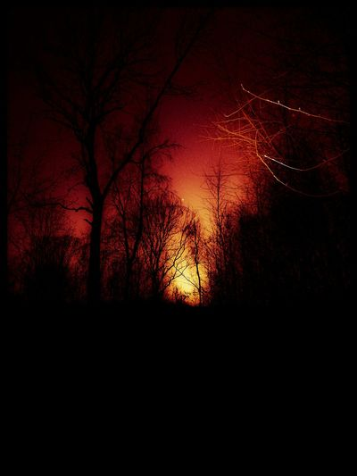 Silhouette Dark Tree Nature Night Red Sky No People Beauty In Nature Sunset Forest Outdoors