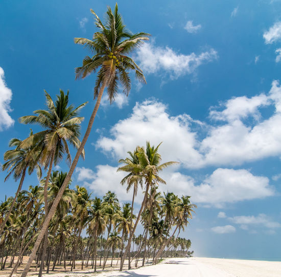 Salalah beach Nature Nikon Beach Nikonphotography EyeEm Selects EyeEm Nature Lover Tree Palm Tree Sky Cloud - Sky Coconut Palm Tree Palm Leaf Coconut Tropical Fruit Papaya Date Starfruit Dominican Republic Tropical Tree