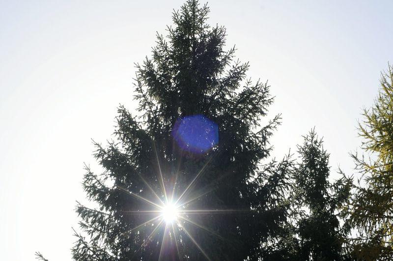 Tree Sun Low