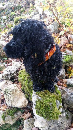 Retour de chasse d Elsie la petite chienne de mon voisin.Elle n aime pas qu on la photographie,elle detourne toujours la tete.! Domestic Animals One Animal (Dordogne)