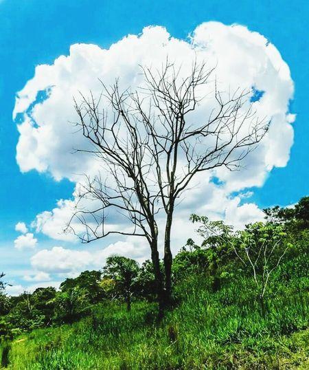Tree Cloud - Sky Sky Branch Single Tree Nature Blue