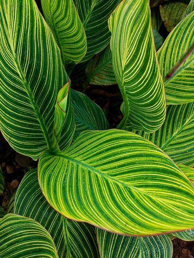 leaf motif Frond Leaf Fern Concentric Close-up Green Color Plant Leaf Vein Leaves Plant Life Green Botany