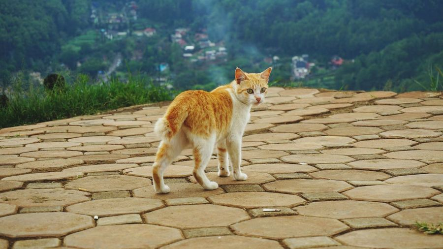 Stray ginger cat looking away