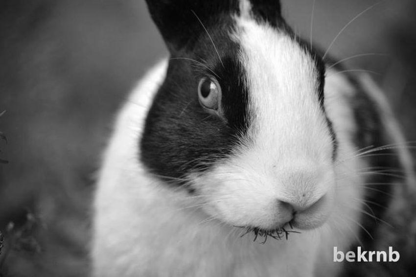 Bunny  Watchalookinat Bekrnb