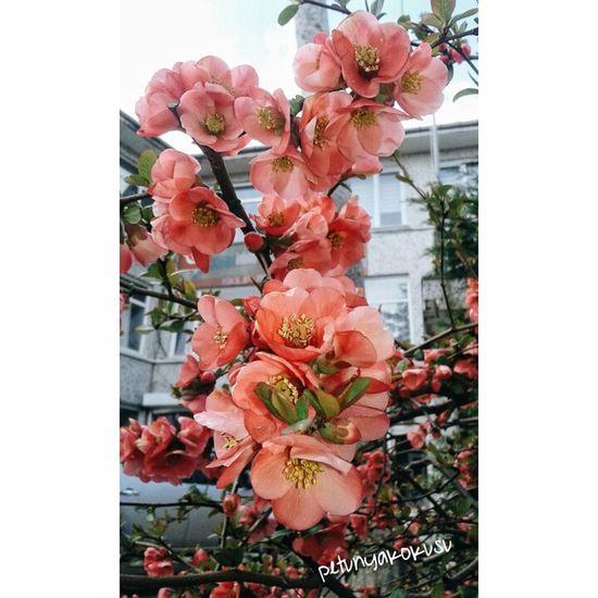 Days Like Flower Hi! Hello World First Eyeem Photo Hello World Love Beautiful Flwoers 🌺🌸🌻🌼