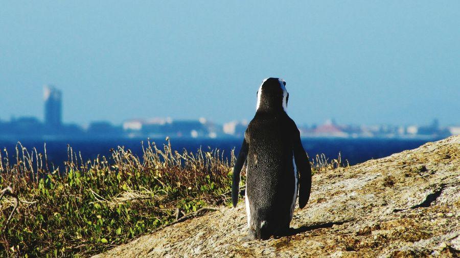 Close-up of penguin against skyline