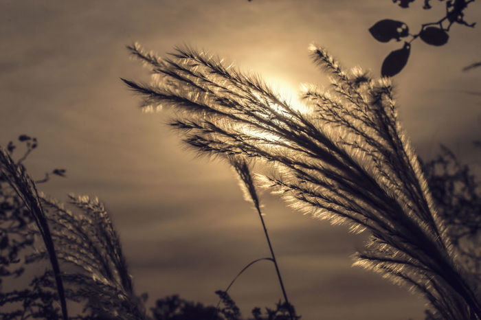 Afternoon Beauty In Nature Closeup Depression Elderly Evening Flowers Growth Hipster Hope Hopeless Leaves Melancholy Nature Night Old Plants Reed Romantic Sadness Sepia Structure Tranquil Scene Tranquility TakeoverContrast