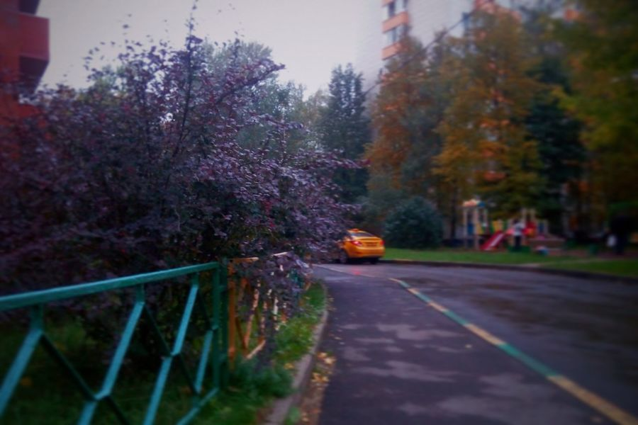 Street Flower Day No People Autumn🍁🍁🍁 Taxi Tree Road Nature Tree