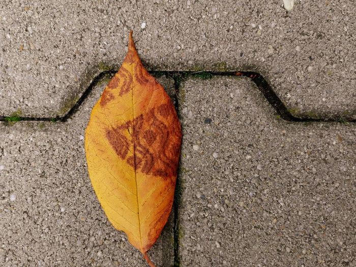 High angle view of dry leaf on concrete