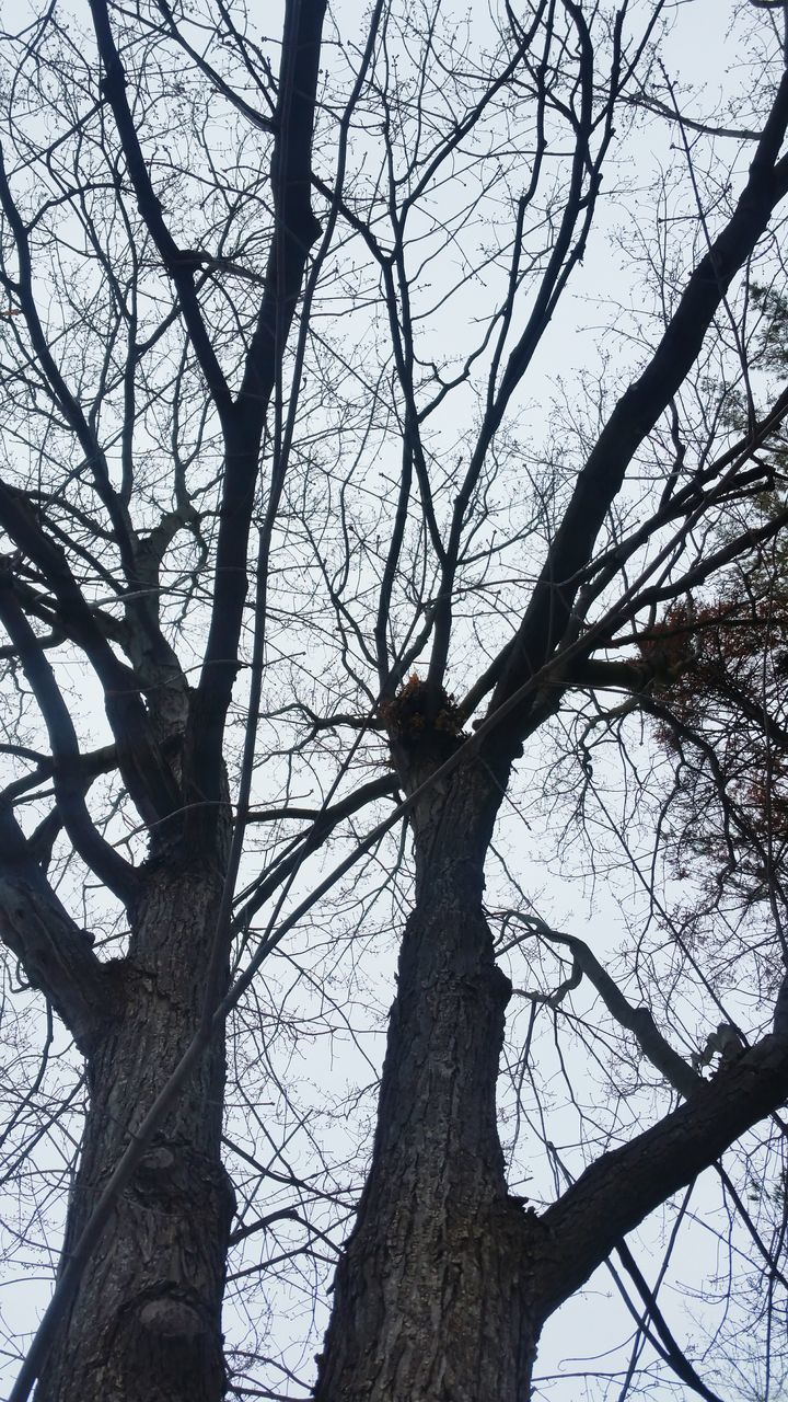 tree, branch, bare tree, tree trunk, low angle view, nature, no people, beauty in nature, tranquility, day, outdoors, forest, scenics, sky, dead tree