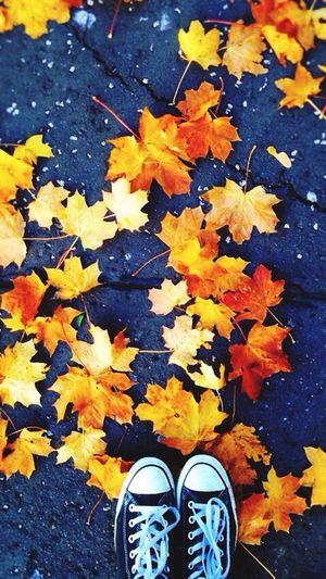Autumn 🍁 Taking Photos Aesthetically Pleasing Leaves On The Ground First Eyeem Photo