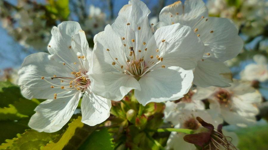 In bianco Nature Flower Passion Flower White Flower Panasonic FS15