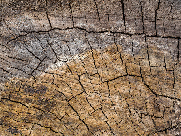 Full frame shot of cracked tree