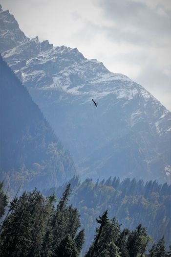 This is a life. Flying high in snow capped mountain tops. Beauty In Nature Flying Free Bird Landscape Mountain Nature Outdoors Scenics Sky Soaring Birds Soaring High Soaring Up Above Tree