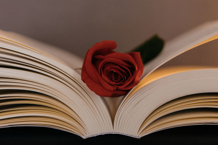 Close-up of red rose on book
